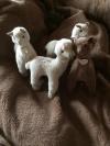 Wunderschöne Alpakastofftiere